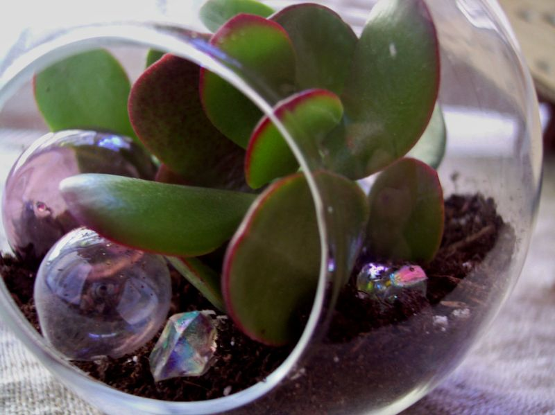 Petal pusher glass bubble