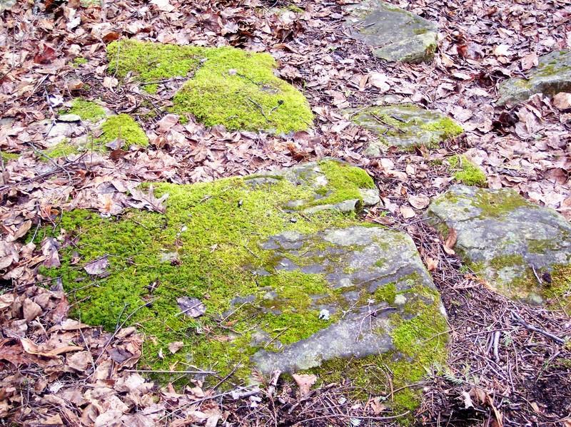 Mossy_rocks