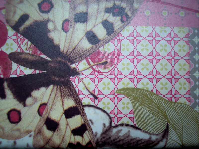 Butterflies_on_lilys_paper_and_vi_3