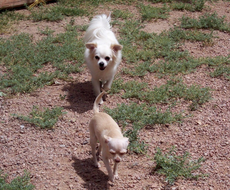 Small_dogs